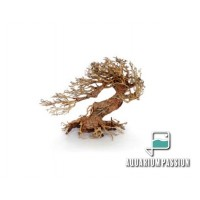 Legno Oriental Wind-3 MEDIUM, radice ornamentale...